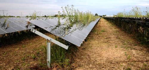Vegetation management for solar parks